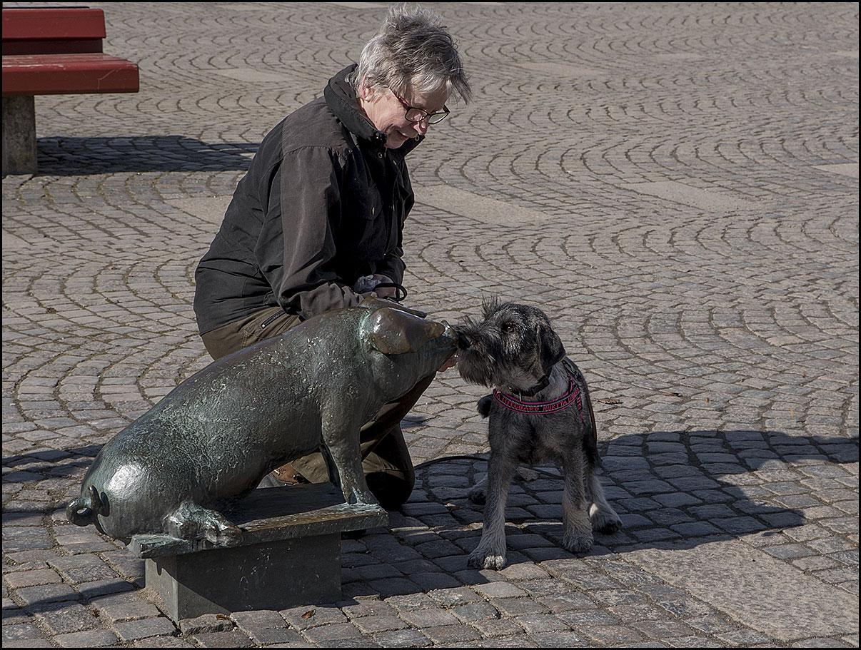 Ricco hälsar på grisen i Värnamo - mars