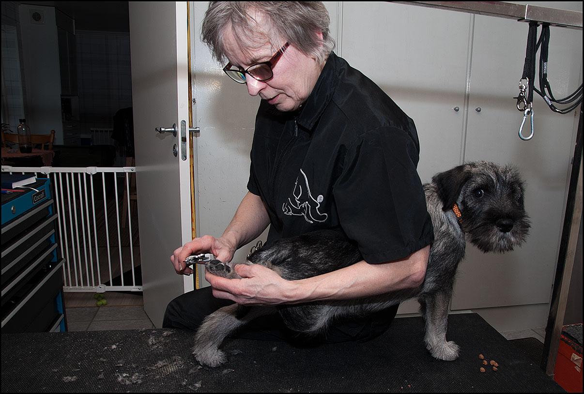 Irene klipper klor på Ricco - feb